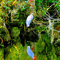Everglades Egret by David Lee Thompson