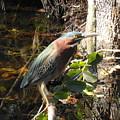 Everglades Inhabitant by Bonita Barlow