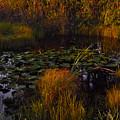 Everglades Pond by Roberto Aloi