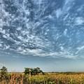 Everglades Sky by David Call