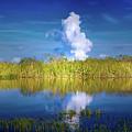 Everglades Smoke by Mark Andrew Thomas