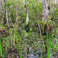 Everglades Swamp Two by Bob Phillips