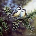 Evergreen Chickadees by Anthony J Padgett