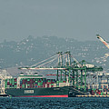 Evergreen Freight Ship And Cargo In Port Of Oakland, California by David Oppenheimer
