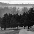 Evergreen Mist by Paul  Trunk