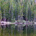 Evergreen Reflections by Jeff Bord