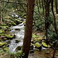 Evergreen Stream Ravine by Joshua Bales