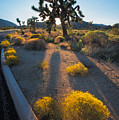 Every Moment Joshua Tree National Park by Andre Distel