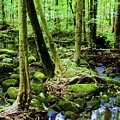 Evolution Of A Forest In Spring  by Diana Dearen
