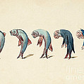 Evolution Of Fish Into Old Man, C. 1870 by Wellcome Images