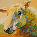 Ewe Portrait IIi by Marion Rose