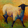 Ewe Portrait Iv by Marion Rose