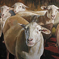 Ewes In The Paddock by Joan Frimberger