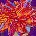 Exciting Red Dahlia by Anne Sands