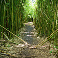 Exlporing Maui's Bamboo by Cory Huchkowski