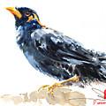 Myna Bird From Thailand by Pornthep Piriyasoranant