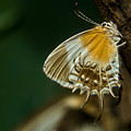 Exotic Butterfly On Tree Bark by Douglas Barnett