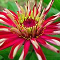 Exotic Flower by Shreeharsh Ambli