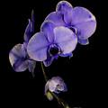 Exotic In Purple by Sara Hudock