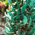 Exotic Jade Vine by Georgia Mizuleva