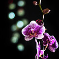 Exotic Orchid 2 by Alex Art and Photo