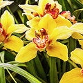 Exotic Orchids  by Jorgo Photography - Wall Art Gallery