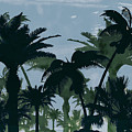 Exotic Palm Trees Silhouettes Water Color by Elaine Plesser
