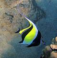 Exotic Reef Fish  by Bette Phelan