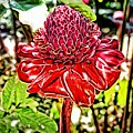 Exotic Torch Ginger by The Art of Alice Terrill