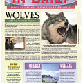 Explore Magazine - Wolves Article by Steve Somerville