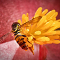 Exploring A Flower by Ryan Kelly
