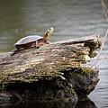 Exploring Turtle by Dale Adams