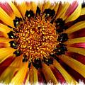 Explosion Of Color - Framed by Carol Groenen