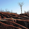 Exposed And Eroded Badlands by Debbie Oppermann