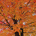 Expressionalism Golden Tree by Aimee L Maher ALM GALLERY