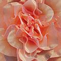 Expressionist Rose by Michele Avanti