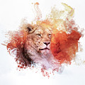 Expressions Lioness by Jai Johnson