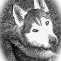Expressive Siberian Husky Mixed Media A4617 by Mas Art Studio