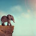 Extinction Concept Elephant Family On Edge Of Cliff by Lee Avison