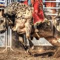 Extreme Bulls by Cat Hesselbacher