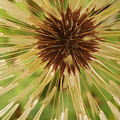 Extreme Dandelion by Rusty Gentry