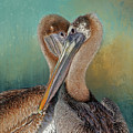 Eye 2 Eye - Heart 2 Heart - Brown Pelican by HH Photography of Florida