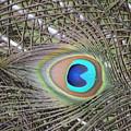 eye by Brad Kennedy