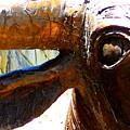 Eye by Diana Moya