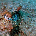 Eye Of A Common Cuttlefish by Sami Sarkis
