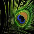 Eye Of A Peafowl by Douglas Barnett