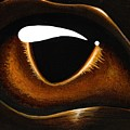 Eye Of Baby Bronze by Elaina  Wagner