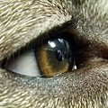 Eye Of The Canine by Michael Parker