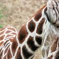 Eye Of The Giraffe. by David Arment