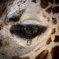 Eye Of The Giraffe by Jennifer Mitchell